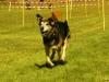 Hunde-0011