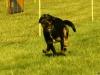 Hunde-0015
