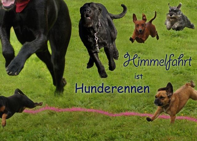 Hunderennen_Himmelfahrt
